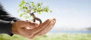 Coyuntuira choca con iniciativa verde