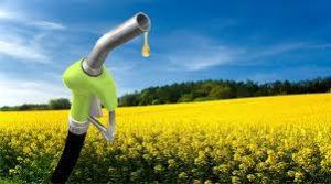 ruta biodiesel