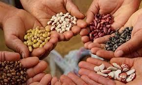 semillas tradicionales chile