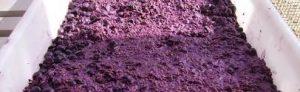 orujo de uva