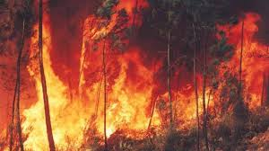 Incendios: Lecciones para no olvidar