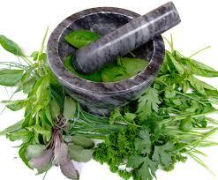 Plantas medicinales que ayudan a la salud