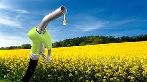 La ruta del aceite para biodiesel