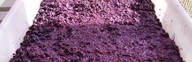Orujo de uva: Inimaginable fuente de salud