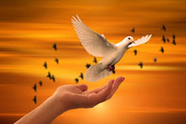 Vida & Espiritualidad
